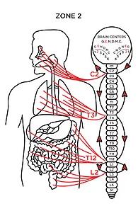 Chiropractic Rochester MN Zone 2