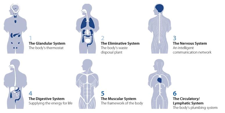 Six Zones of the Human Body in Rochester MN